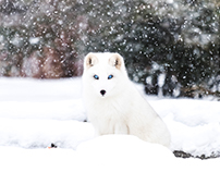 Parc OMEGA - Photography