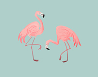 Flamingo Surface Design
