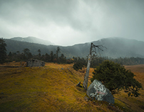 Gloomy·Nyingchi