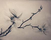 My Lovely Magnolia