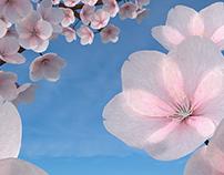 Blender Sakuras