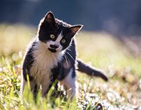 Domesticated animals - Domače živali