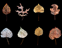 Wabi-Sabi (Leaves)