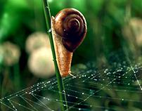 Snail Maya,Arnold,photoshop , Zbrush,Mari,Nuke