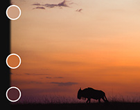 WIP: Passport To Creativity / Colours of the Mara