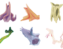 Dinomash Flora