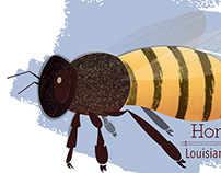 Apis mellifera -- Honey Bee
