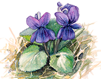 Violets ease my heart