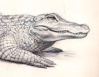 Codex Zoologica