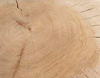 Sycamore Cross-Section Coffee Table