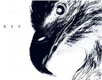 Display - 02