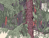 Weeping Cedar