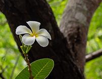 The Beauty Of Nature In Sri Lnka !
