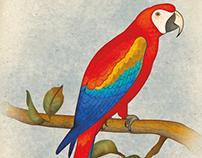 Birds | Santa Fe Zoo