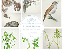 Botanical & Zoological Illustrations