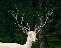 The Big Issue 'Deer'