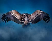 Wolves + Vultures