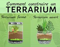 Infographie Terrarium