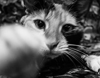 Anandi, this little tigress
