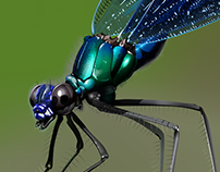 Photo realistic dragonfly vectorization