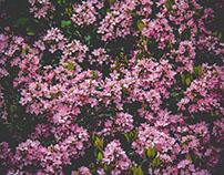 Arisleyda Urena's Floral Photo Inspiration