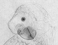 Nature Drawings - Animals II