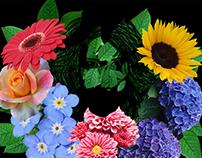 ·Flowers.GIF·