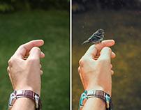 Photoshop Manipulation.