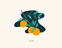 Fruit illustrations // 2019
