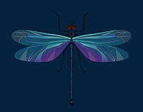 Symetric Illustrations of insects
