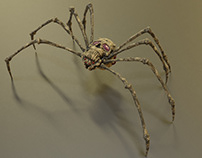 Spider (Animation)