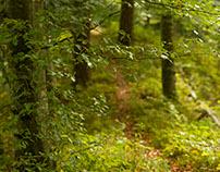 On my doorstep: Part III Forest