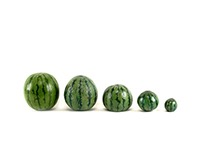 Watermelons (?)