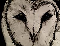 Illustration Class Work 2014