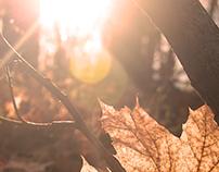 Autumn 2015 Brno CR