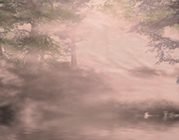 Misty pine forest and river