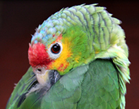 parakeet ♥