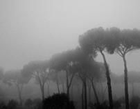 Photography. Foggy Morning