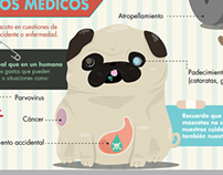 Infographic: Pet insurance