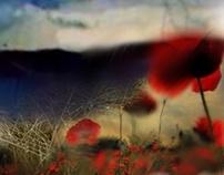 Red poppy2