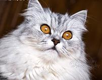 Zozo Cat
