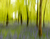 Abstract Woodlands