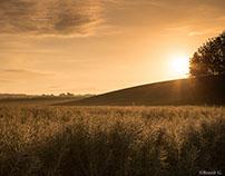 Versailles Plain