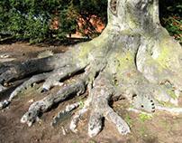 Tree Gears