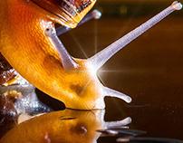snails_reloaded