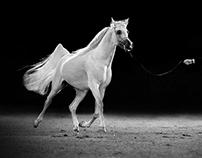 Al Khalediah Arabian Horse Festival(30 pic