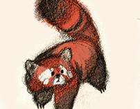 Red Panda 01