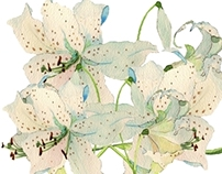 Shades of White lilies