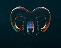 Steel Midnight - R'n'R Animals