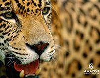 Amazon Conservation Association Promotional Postcards